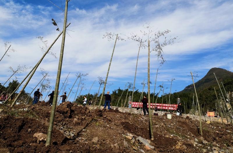 拟新造竹3万亩 宜宾兴文县启动冬季大规模造竹活动